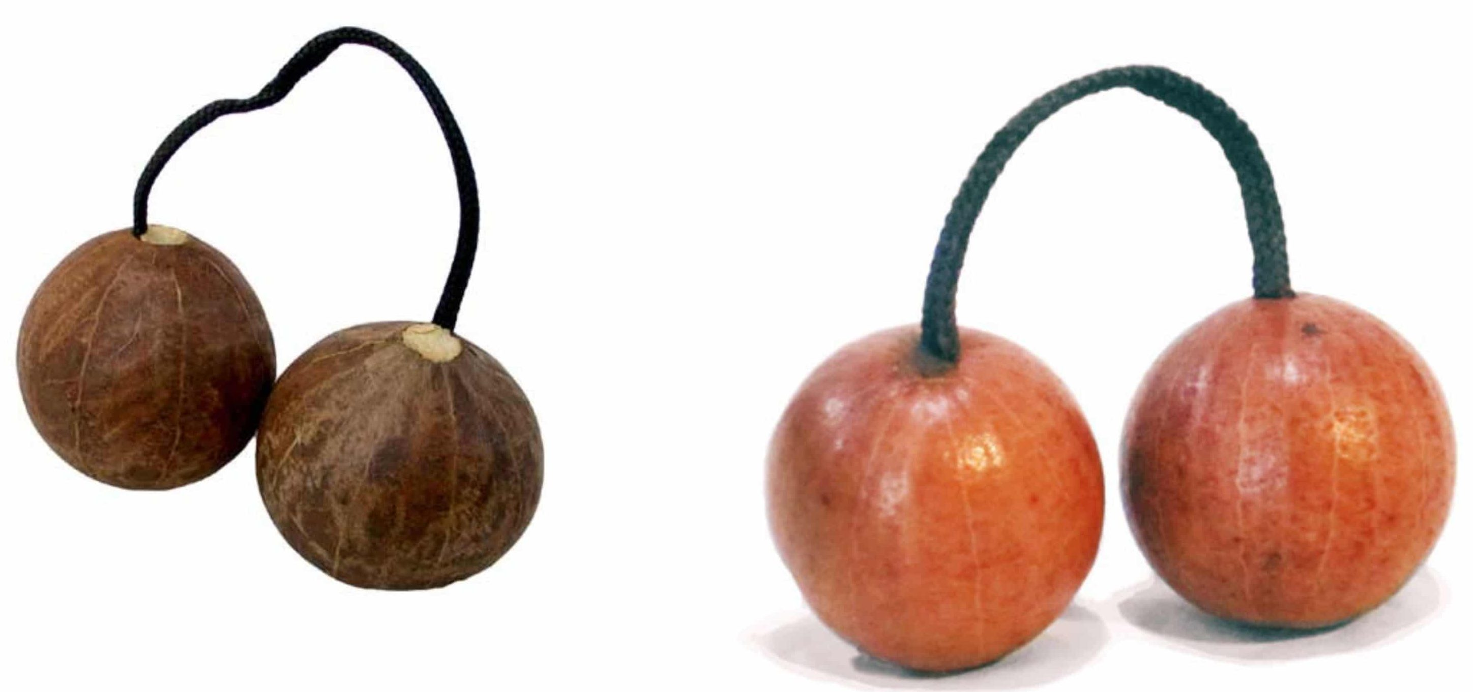 Originating from Ghana, the aslatua is played by holding and shaking one gourd in the palm while swinging the second gourd around.